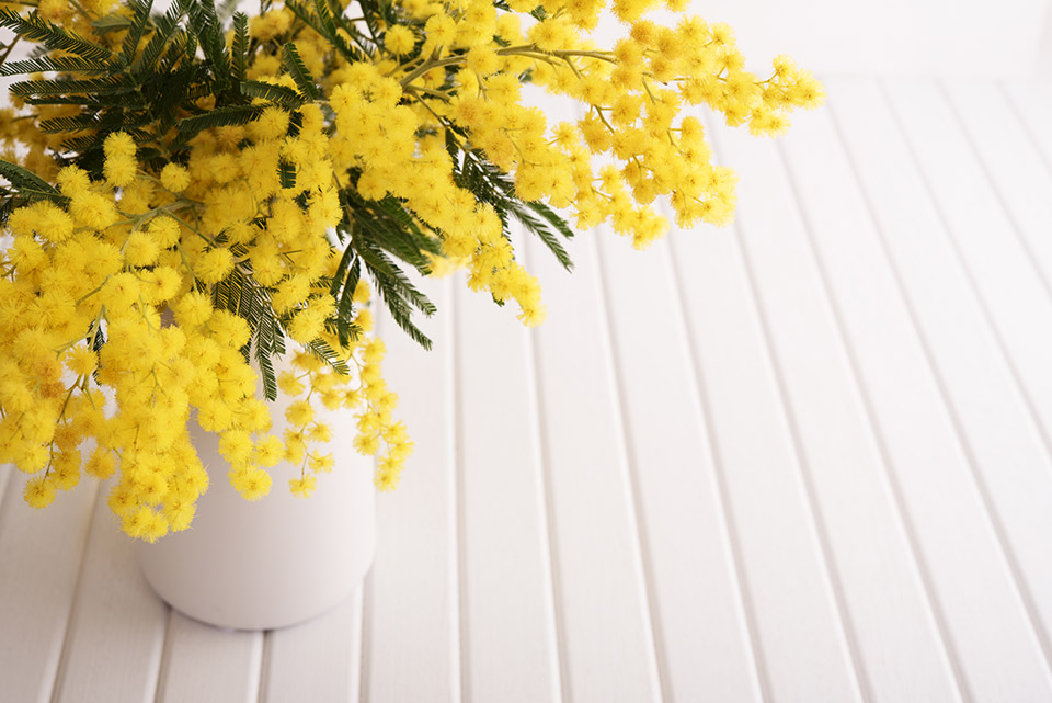 bigstock-Vase-with-mimosa-flowers-119462696